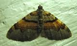 Xanthorhoe labradorensis - 7368 - Labrador Carpet