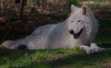 Wolf Conservation Center Photo Session
