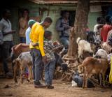Selling Animals, Dorze Market