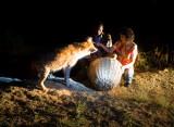 Kathy Feeding the Wild Hyenas