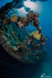 corals__reefs_and_scuba_divers