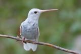 Hybrids, Leucistic & Albinistic Birds