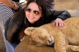 Interaction with lion cub at Lion Safari Park