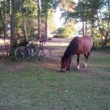 CLUB TOUR HORSE