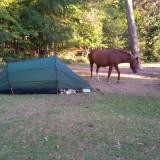 BIG HORSE SMALL TENT!