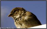 Bird 1741