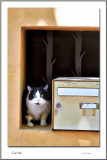 Chat boîte