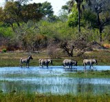 Okavanga Delta, Botswana 2013