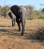 Chobe National Park, Botswana 2013