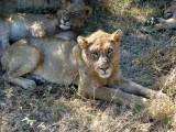 Kruger National Park, South Africa 2013
