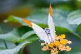 Traverse City Butterfies
