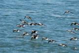 2017 Port Huron Ducks