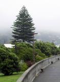 Seaside fog 1.jpg