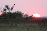 Caracara Sunset