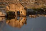 NAMIBIA 2014