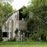 This is the barn on one of the family farms that is still standing.  The farm I grew up on have vanished.  All that remains is the driveway which is now a field entrance.
