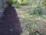 Seeded for poke milkweed