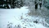 Winter garden after a heavy snow