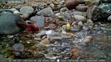Overlook Falls trail cam captures 3 species