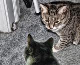 A Cat Tale