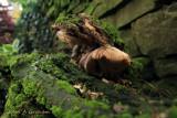 Strong mushroom