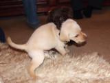 Ollie attacks