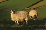 Whatever makes ewe happy