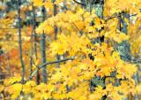 Fall Foliage_2376.jpg
