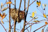 Used Nest_2006.jpg