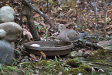 Bird Bath Birds - July-Nov 2015
