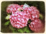 Floral photography with my iPad ....