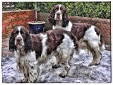 We have had Carlie and Jack one year today...
