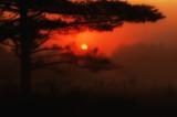 Misty sunrise Garland pond