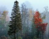 Beautiful lighe in autumn