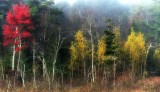 The vivid colors of autumn