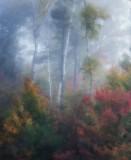 Magic light  in  early autumn mist.