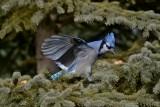 area_birds