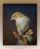 sparrow-3-matt1-30-093.jpg