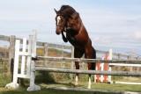 Rise & Shine Sport Horses