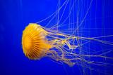 2013 Aquarium La Rochelle (France)