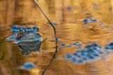 gallery : Frog