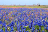 Pumping for Bluebonnets
