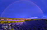 Earth Day 2014 - Bluebonnet Rainbow