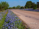 RR-307 Roadside Blue
