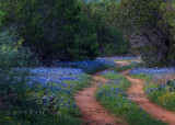 Road to Bluebonnet Dreams