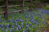 Bluebonnet Cedar Fence