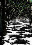 Rorschach Walkway