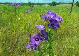 Meet the Wildflowers