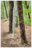 A tree trunk collection