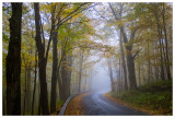 A foggy morning on Platte Clove Road